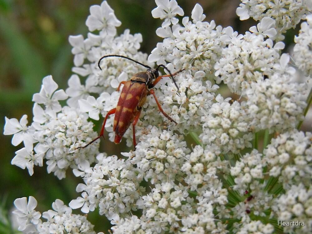 Little Bug on Flowers by Heartdra