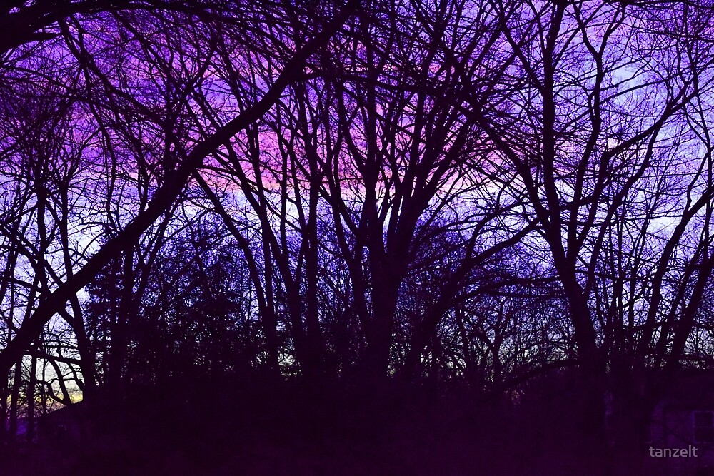 Purple Sunset by tanzelt