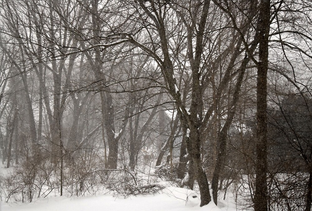 Snowy Forest by tanzelt