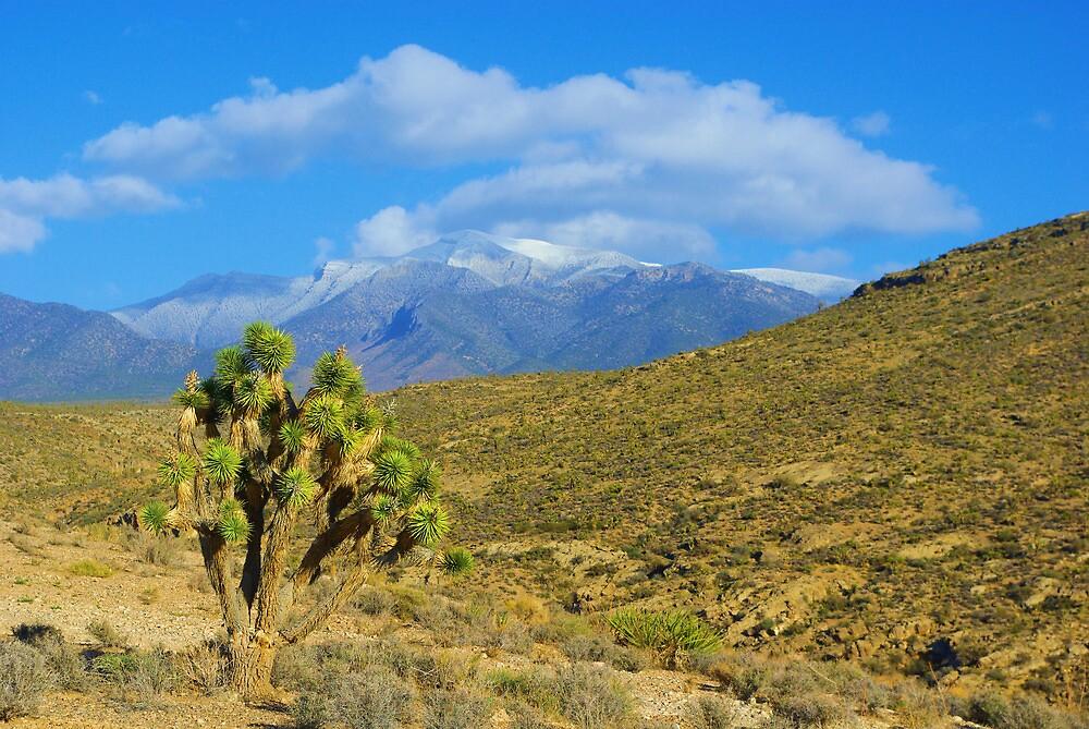 Joshua meets Mount Charleston, Nevada by Claudio Del Luongo