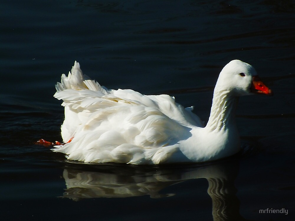 White Goose by mrfriendly