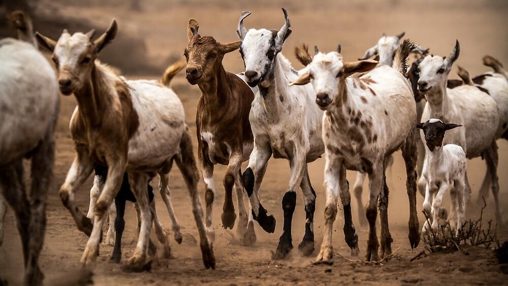 Goat migration by lanceallot