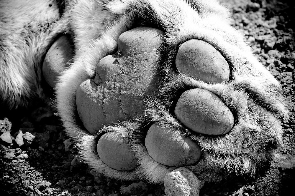 Paw of a King by lanceallot