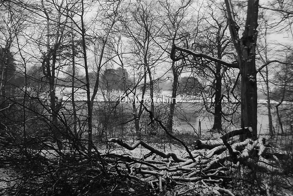 Snowy Woods by DMHotchin