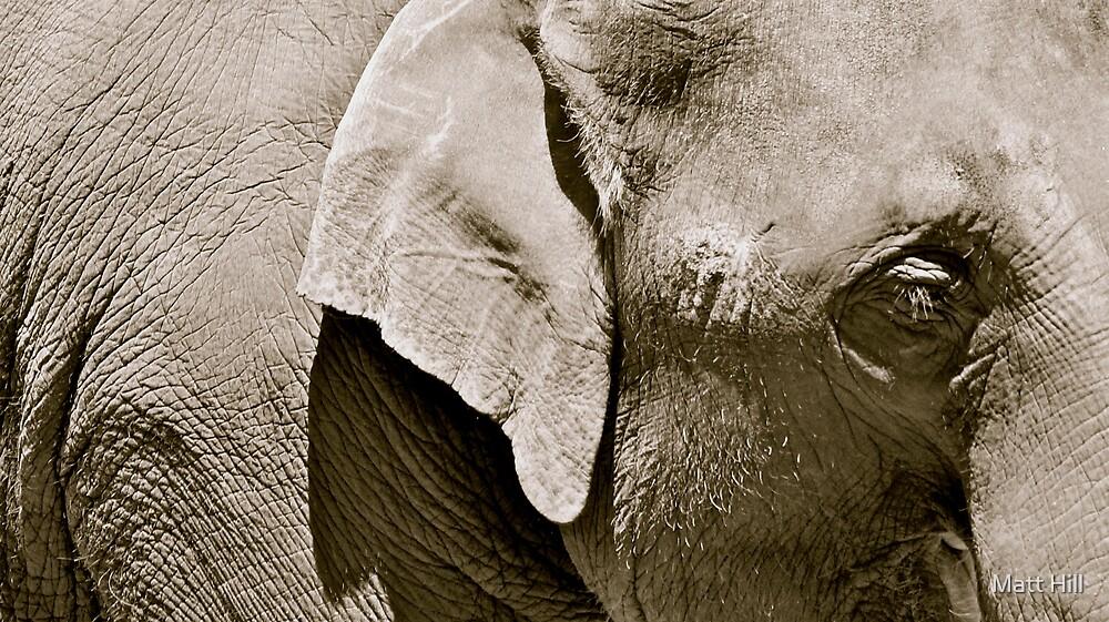 Elephant Tears by Matt Hill