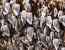 Tired Mussels by mark7b