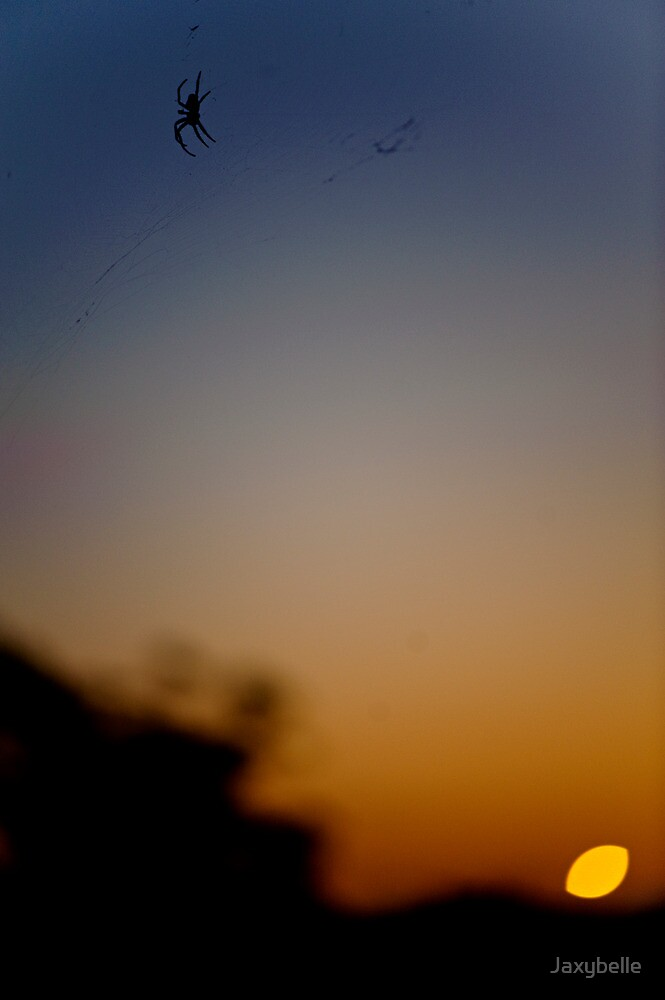 Sunrise spider  by Jaxybelle