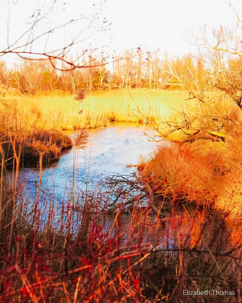 Town Brook, Sandwich, Massachusetts, Cape Cod by Elizabeth Thomas