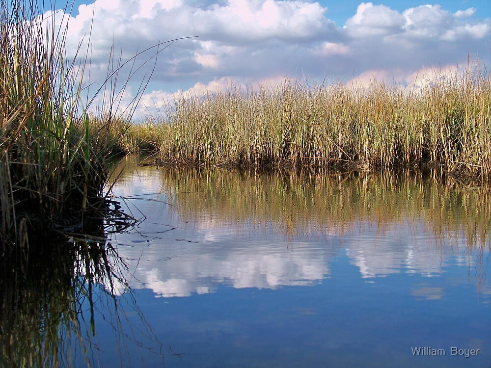 Sawgrass Water Sky and clouds 2 by William  Boyer