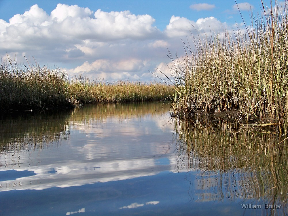 Sawgrass Water Sky and clouds 5 by William  Boyer
