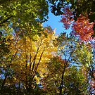 Fall Color Display by mussermd