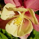 Columbine Details by mussermd