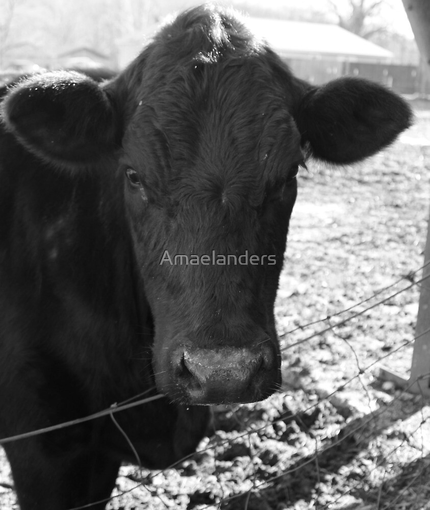 Cow  by Amaelanders