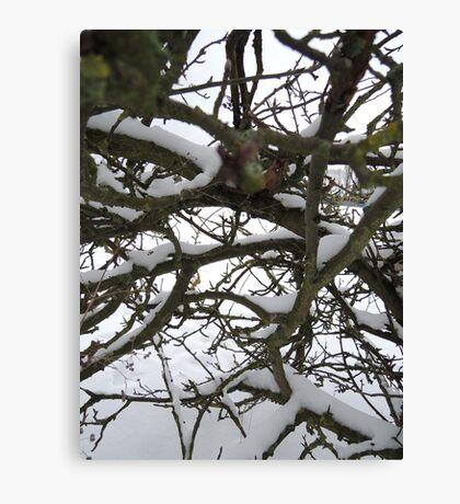 Through winter branches Canvas Print