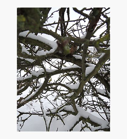 Through winter branches Photographic Print