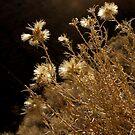 Desert Light by Alinta T. Giuca