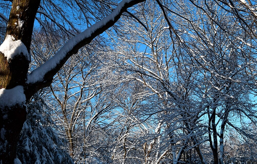 Blue Skies After Snow by tanzelt