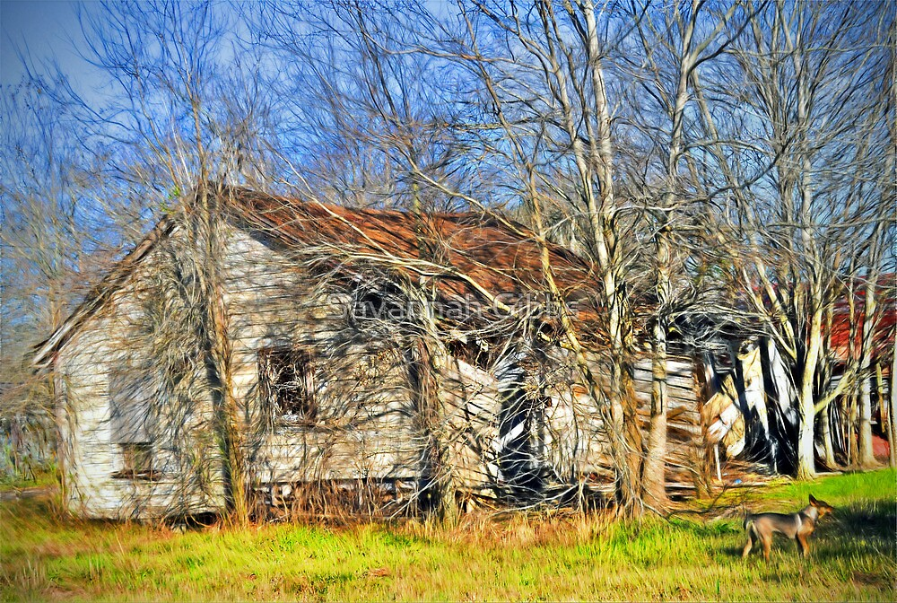 Old House by S Gibbs