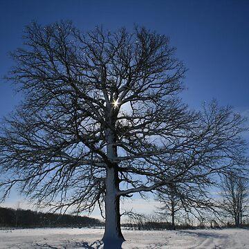 Christmas Oak by ArtistDCB