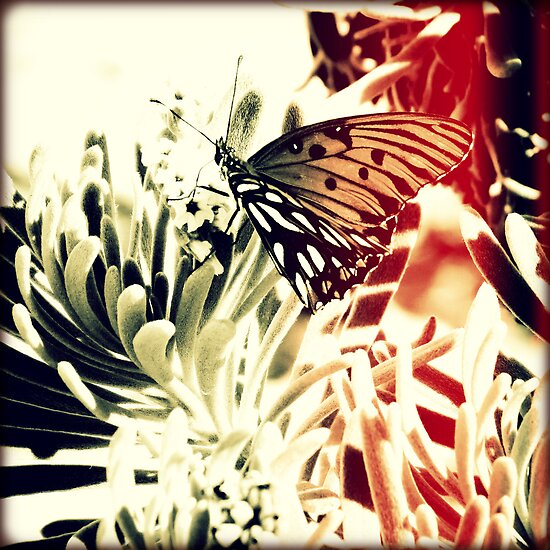 Beach Butterfly Sunset by Chris Andruskiewicz