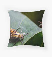 Three lined potato beetles - lema trilineata daturaphila Throw Pillow