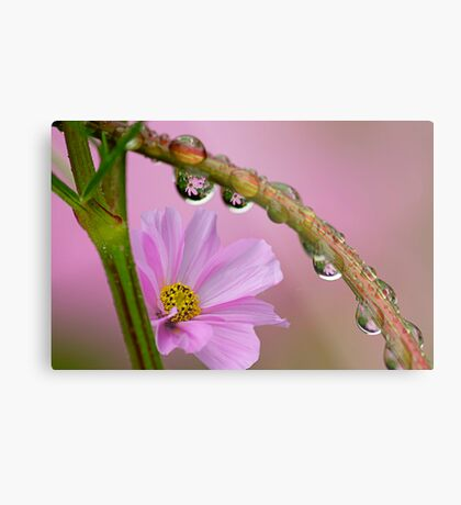 Cosmos in the rain Metal Print