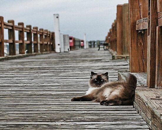 Cat Pier  by Brandon Batie