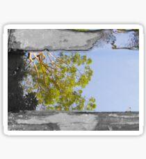 Tree reflection in water sc Sticker