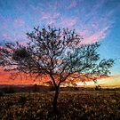 Outback Sunset         (EH) by Raymond Warren