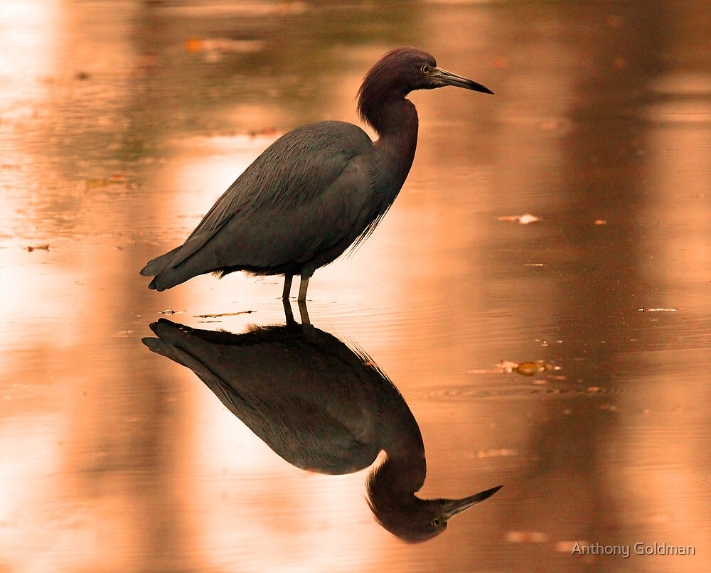 An almost perfect reflection! by Anthony Goldman