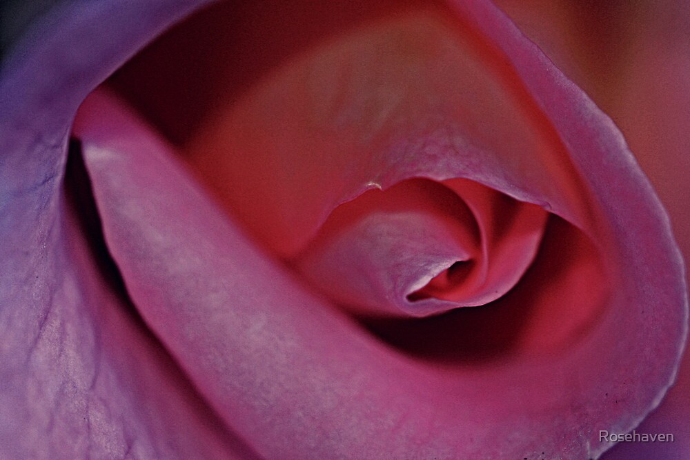 """""""Heart Throb , macro"""" by Rosehaven"""