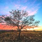 Outback Sunset (GO) by Ray Warren