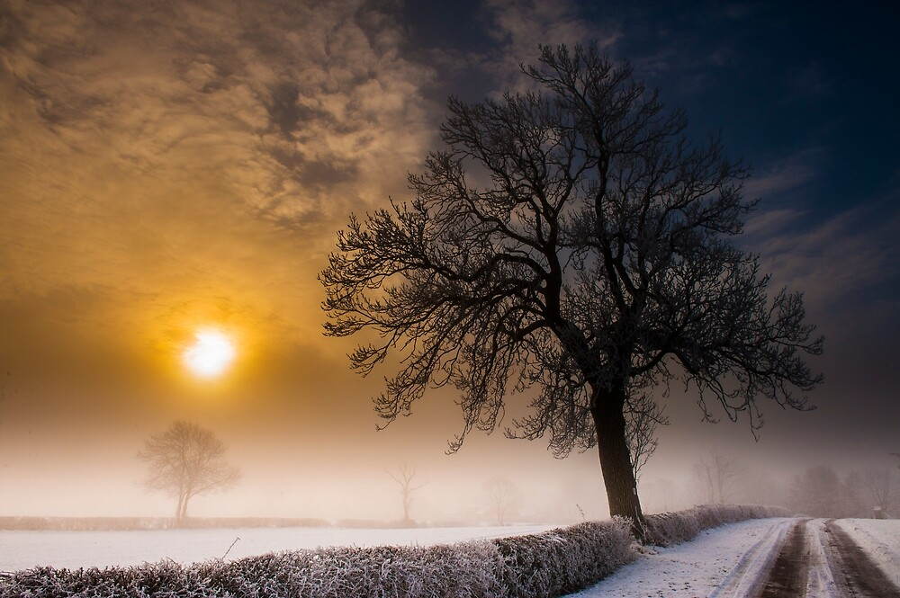 Morning Mist by Moments In Time Photography