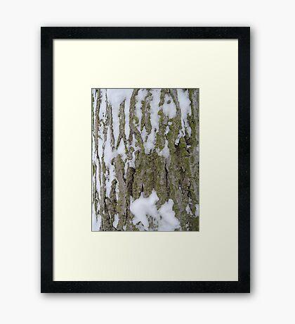 Snowy Bark Framed Print