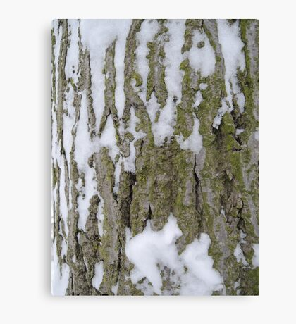 Snowy Bark Canvas Print