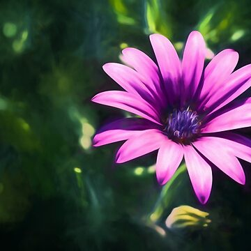 Pink Daisy  (GO) by RayW