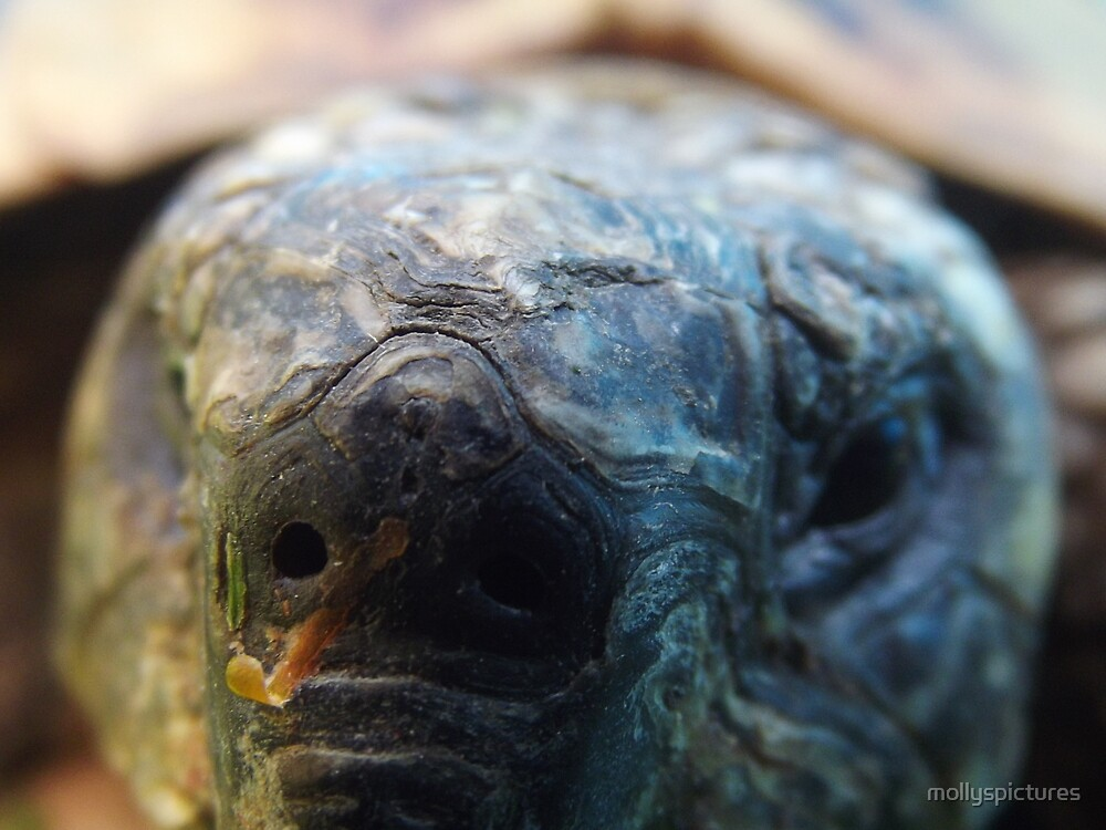 Close up tortoise by mollyspictures
