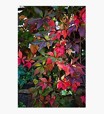Many colours of autumn Photographic Print