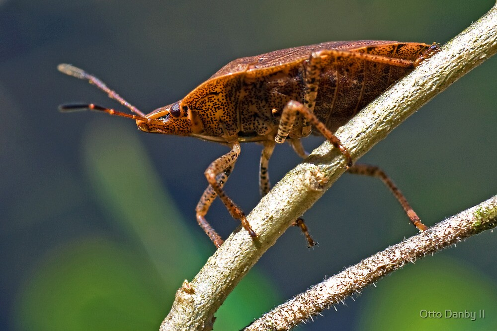 Stink Bug by Otto Danby II