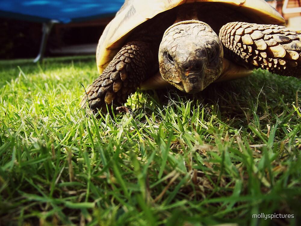 Walking tortoise by mollyspictures