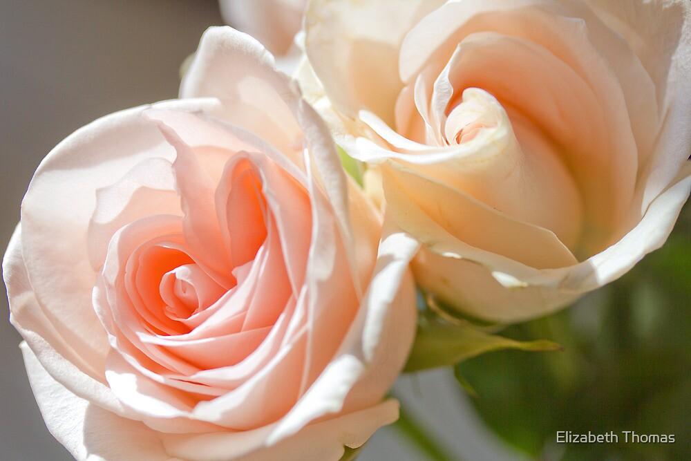 Subtle Rose 5 by Elizabeth Thomas