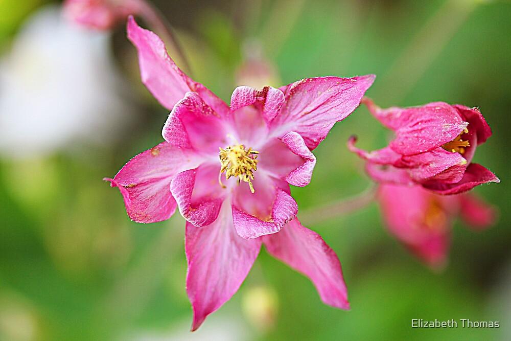 Pink Flower by Elizabeth Thomas