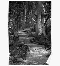 Black and White Road Less Traveled Poster