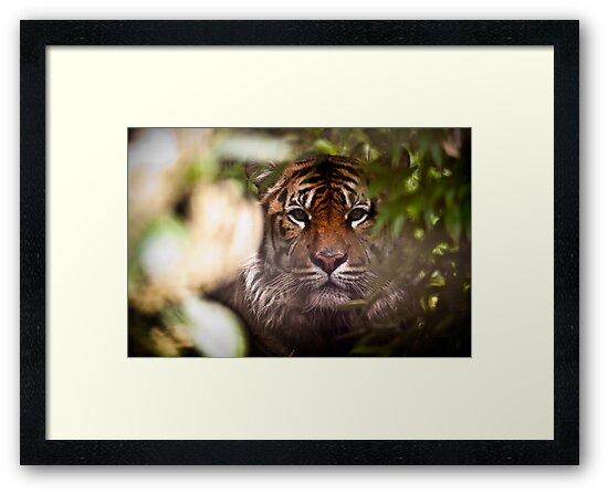 Sumatran Tiger - Hide and Seek by CelticOrigins