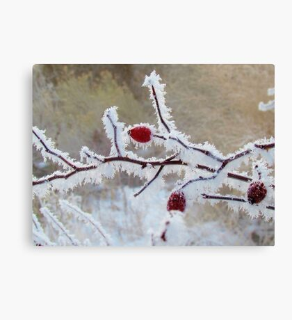 Frost Berry Red Canvas Print