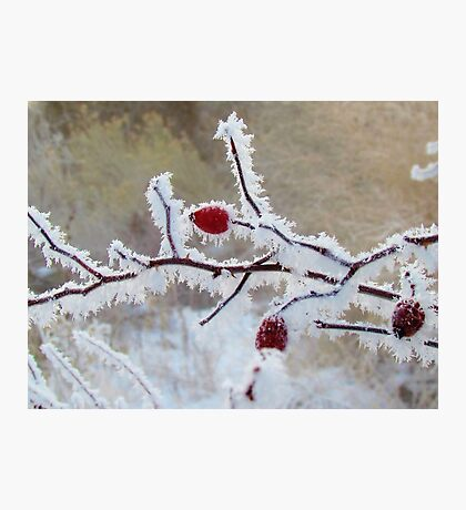 Frost Berry Red Photographic Print