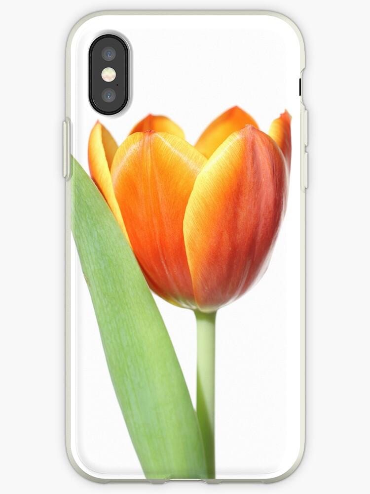 orange tulip by Chris  Trayer