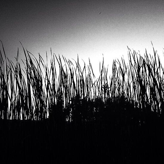 Grassy Countryside by Megan Nicole Czerwinski