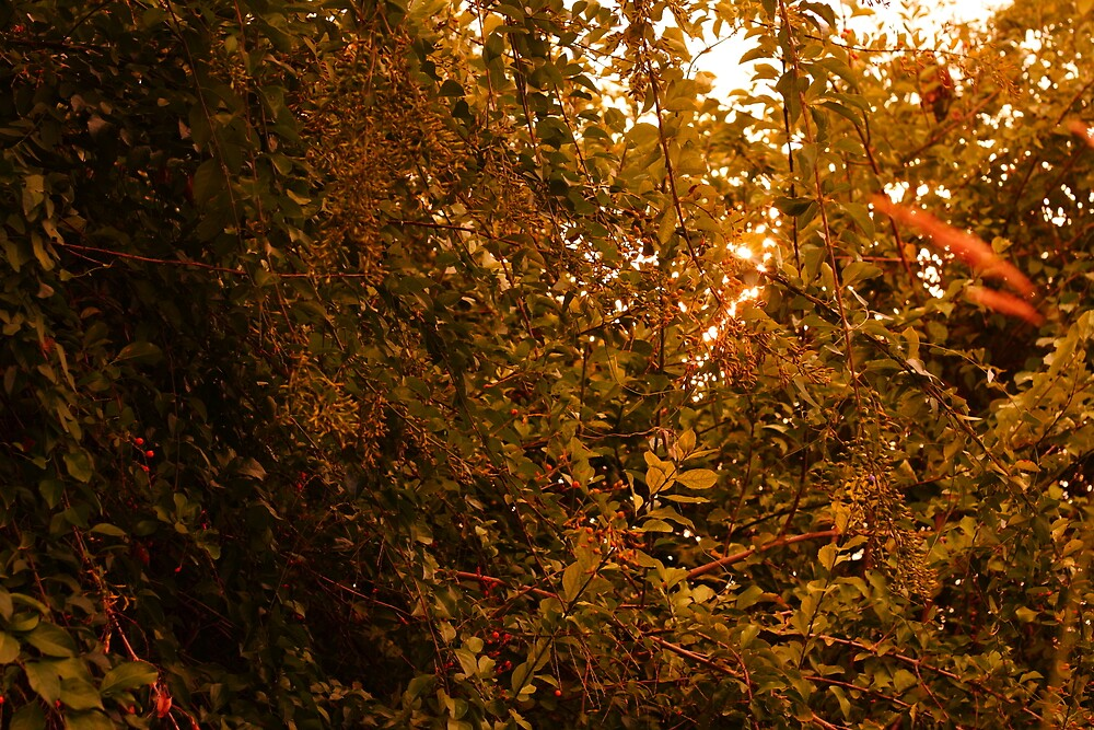 sunlight through the leaves by DeftFotography