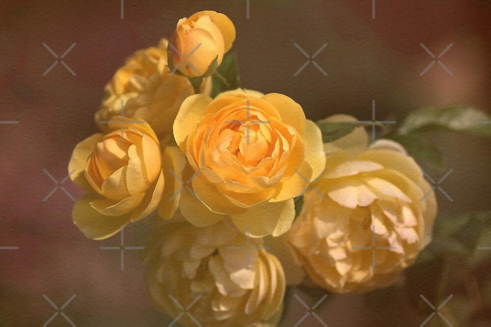 Romantic Roses by Joy Watson